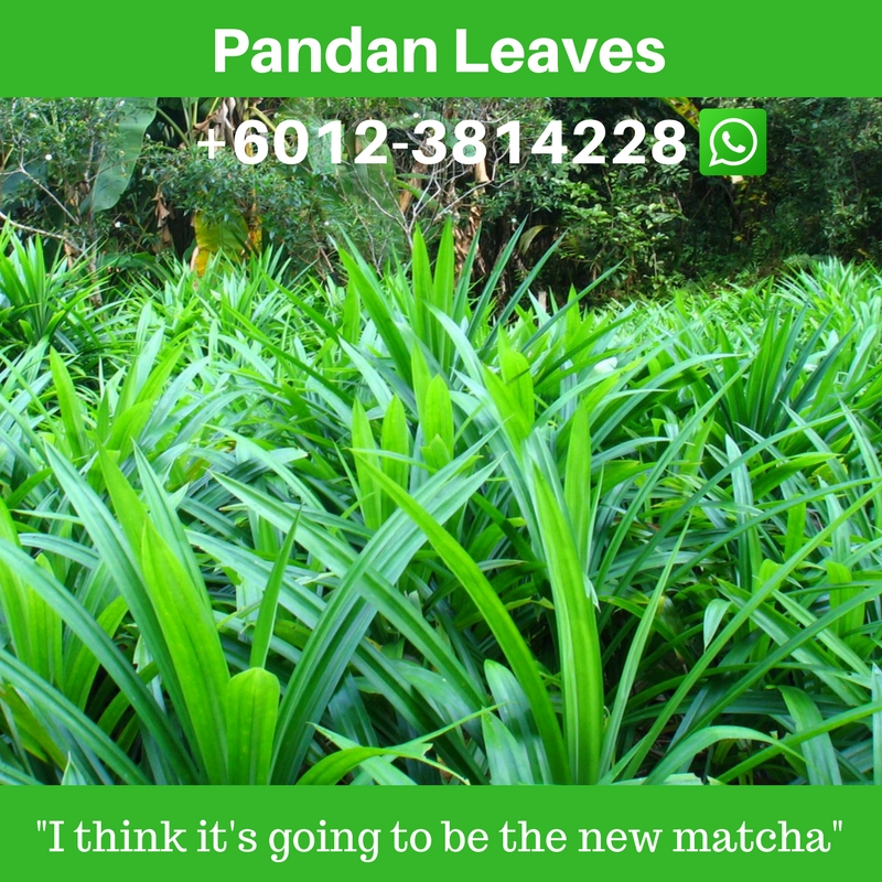 pandan leaves where to buy in usa